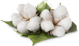 Cotton-new.png